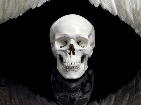 Evil「Human skull and wings」:スマホ壁紙(11)