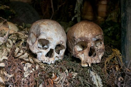 ドクロ「Human skulls in tribal village, Highlands, Papua New Guinea」:スマホ壁紙(6)