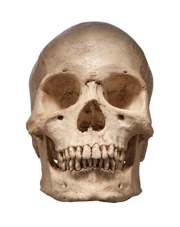 ドクロ「Human skull, frint view」:スマホ壁紙(6)