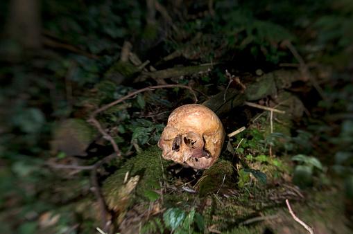 ドクロ「Human skull in forest」:スマホ壁紙(12)