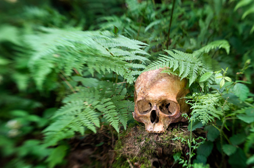 ドクロ「Human skull in forest」:スマホ壁紙(18)