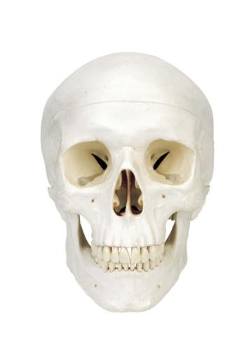 ドクロ「Human skull」:スマホ壁紙(19)