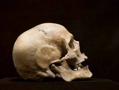 ドクロ「Human skull, side view, studio shot」:スマホ壁紙(14)