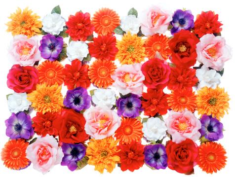 カーネーション「Flowers」:スマホ壁紙(10)