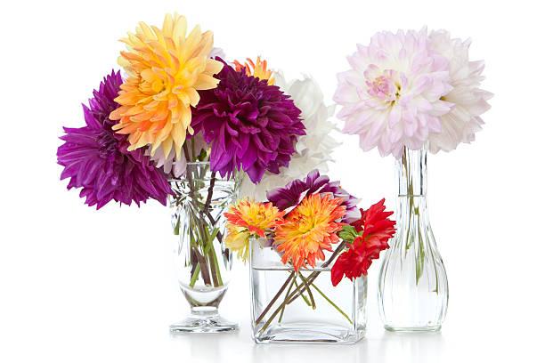 Flowers:スマホ壁紙(壁紙.com)