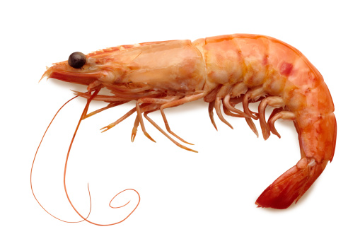Prawn - Seafood「Cooked shrimp with full shell isolated on white background」:スマホ壁紙(7)