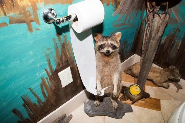 Raccoon holding toilet paper in painted bathroom:スマホ壁紙(壁紙.com)