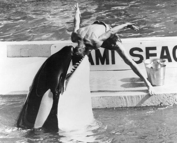 Killer Whale「Killer Whale」:写真・画像(11)[壁紙.com]