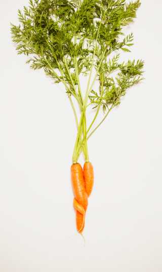 ニンジン「Intertwined carrots on a white background」:スマホ壁紙(7)