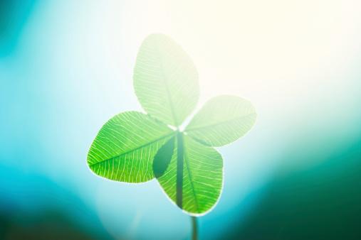 Clover Leaf Shape「Four leaf clover」:スマホ壁紙(12)