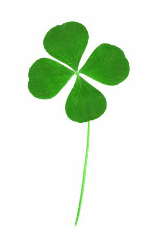 Good Luck Charm「Four Leaf Clover」:スマホ壁紙(9)