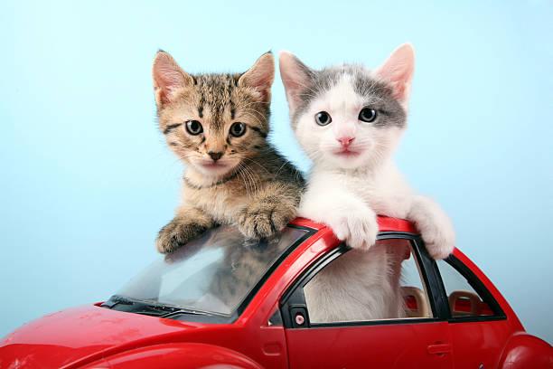 Kittens on summer vacations:スマホ壁紙(壁紙.com)