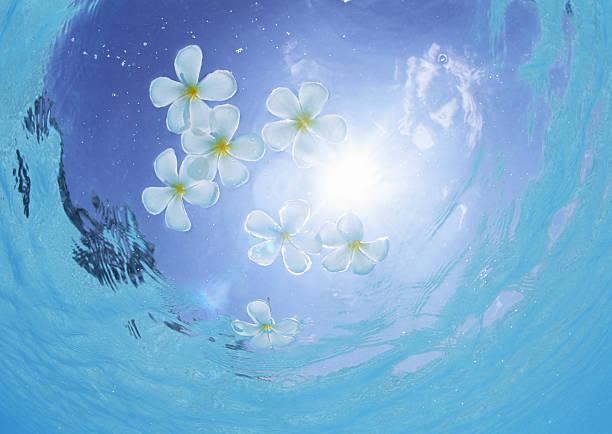 Frangipani floating on the sea:スマホ壁紙(壁紙.com)