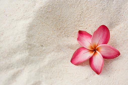 Hawaiian Culture「Frangipani (Plumeria) Flower on Sand」:スマホ壁紙(10)