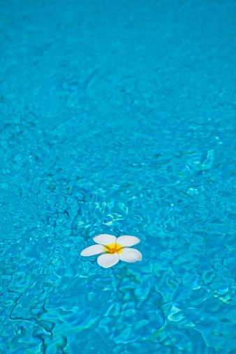 プルメリア「Frangipani flower in swimming pool」:スマホ壁紙(17)
