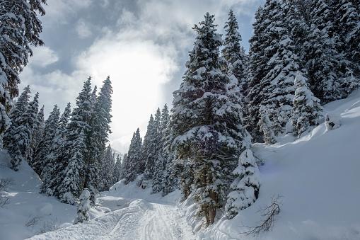 北チロル「Austria, Tyrol, Ziller Valley, Hochfuegen, winter landscape」:スマホ壁紙(11)