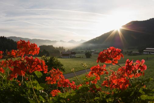 Walchsee「Austria, Tyrol, Walchsee, Zahmer Kaiser at sunrise」:スマホ壁紙(9)