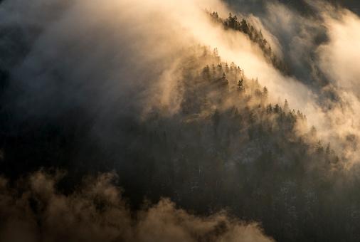 北チロル「Austria, Tyrol, Kufstein, Trees and fog」:スマホ壁紙(17)