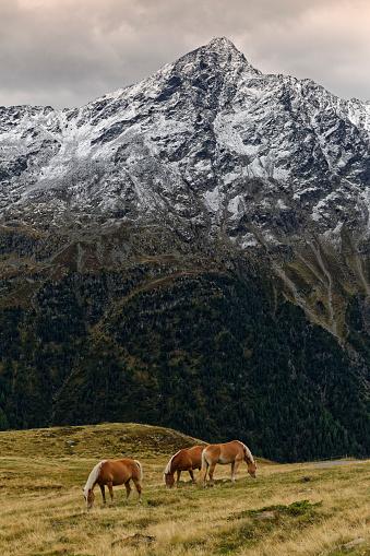 北チロル「Austria, Tyrol, Oetztal, Soelden, horses on alpine meadow」:スマホ壁紙(3)