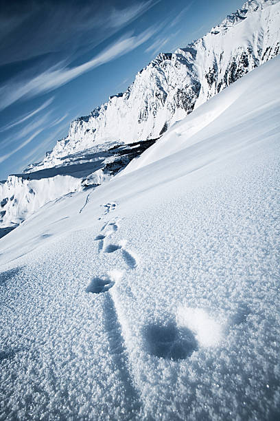 Austria, Tyrol, Ischgl, winter landscape in the mountains with tracks in snow:スマホ壁紙(壁紙.com)