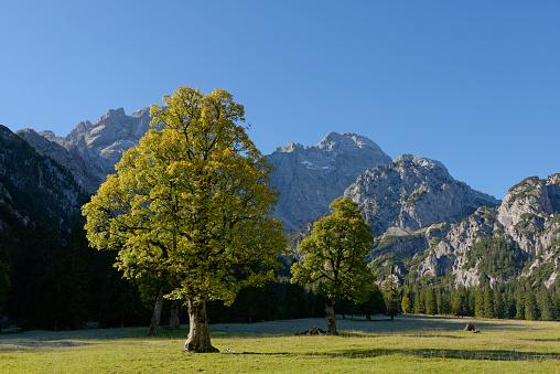 セイヨウカジカエデ「Austria, Tyrol, Eng, Rohn Valley, Karwendel, Sycamore Maple in autumn」:スマホ壁紙(10)