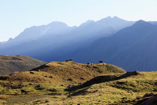 Ötztal Alps「Austria, Tyrol, Oetztal Alps, Cow in kaunertal valley」:スマホ壁紙(14)