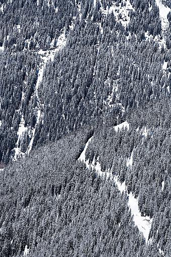 イシュグル「Austria, Tyrol, Ischgl, trees in winter landscape」:スマホ壁紙(14)