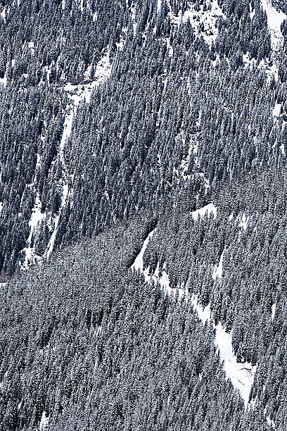 Austria, Tyrol, Ischgl, trees in winter landscape:スマホ壁紙(壁紙.com)