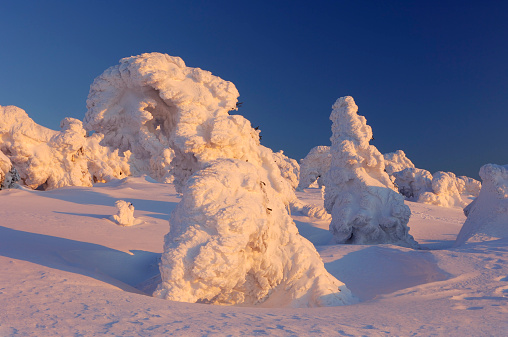 Harz National Park「Germany, Saxony-Anhalt, snow-covered Norway spruce trees, Picea abies, at Brocken Mountain by sunset」:スマホ壁紙(19)