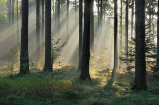 Mystery「Germany, Saxony, Misty forest」:スマホ壁紙(7)