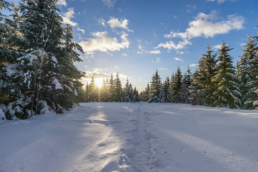 雪山「Germany, Saxony-Anhalt, Harz National Park, Landscape in winter, hiking trail in the evening」:スマホ壁紙(15)