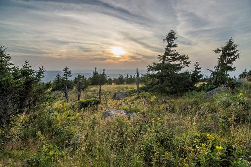 Harz National Park「Germany, Saxony-Anhalt, Harz National Park, spruce trees and foxglove, Brocken Mountain」:スマホ壁紙(4)