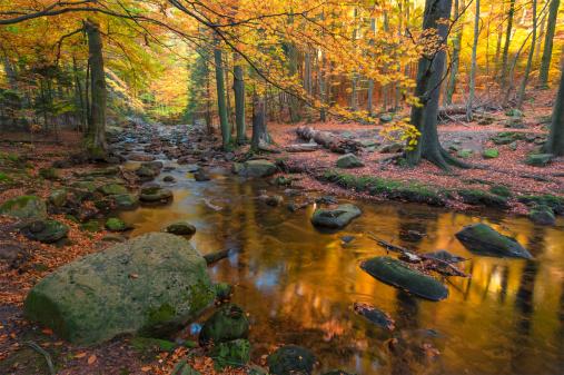 Harz National Park「Germany, Saxony-Anhalt, Harz National Park in autumn」:スマホ壁紙(7)