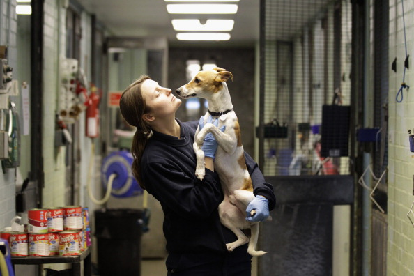 Heathrow Airport「Animals At The Heathrow Animals Reception Centre」:写真・画像(9)[壁紙.com]