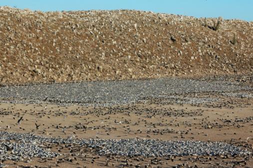 Eco Tourism「elegant terns and Heermann's gulls nesting」:スマホ壁紙(16)
