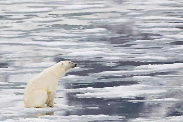 Europe, Norway, Svalbard, Polar bear sitting on ice:スマホ壁紙(壁紙.com)