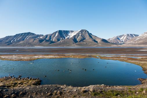 Svalbard and Jan Mayen「Europe, Norway, Spitsbergen, Svalbard, Longyearbyen, Eider lducks swimming in lake」:スマホ壁紙(8)