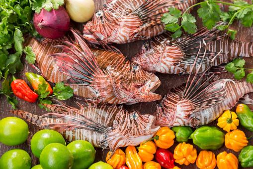 野菜・フルーツ「ライオンの魚と野菜」:スマホ壁紙(8)