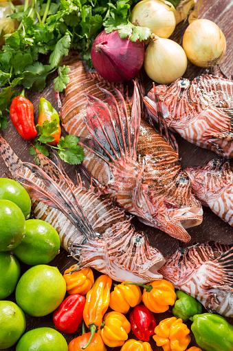 野菜・フルーツ「ライオンの魚と野菜」:スマホ壁紙(9)