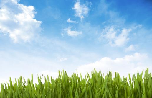 Sunny「Grass, Sky , Drops」:スマホ壁紙(15)