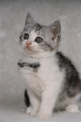 Kitten「Single Kitten」:スマホ壁紙(17)