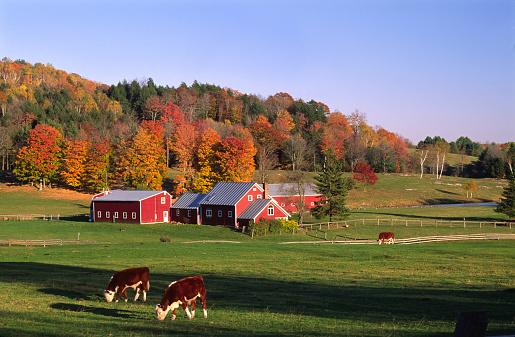 Animal Themes「Farm near Thetford, Vermont, USA」:スマホ壁紙(4)
