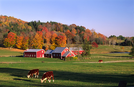 Pasture「Farm near Thetford, Vermont, USA」:スマホ壁紙(13)