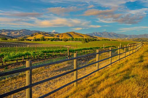 Rolling Landscape「Spring vineyard in the Santa Ynez Valley Santa Barbara, CA」:スマホ壁紙(19)