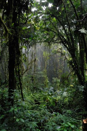 気候「熱帯雨林」:スマホ壁紙(9)