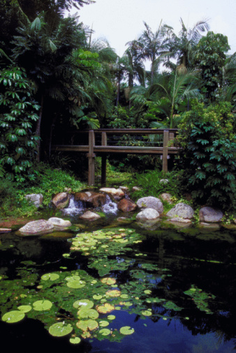 Water Lily「Rain forest walk, South Bank, Brisbane, Australia」:スマホ壁紙(13)
