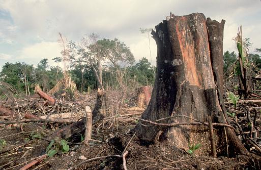 1990-1999「Rain forest Destruction in Belize」:スマホ壁紙(12)