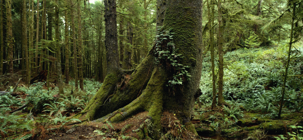 Ecola State Park「Rain Forest」:スマホ壁紙(8)