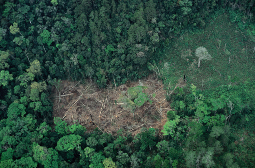 Lumber Industry「Rain Forest Deforestation, Chiapas」:スマホ壁紙(11)