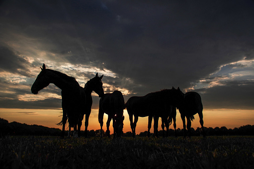 Horse「Rustic sunset scene with horses」:スマホ壁紙(3)